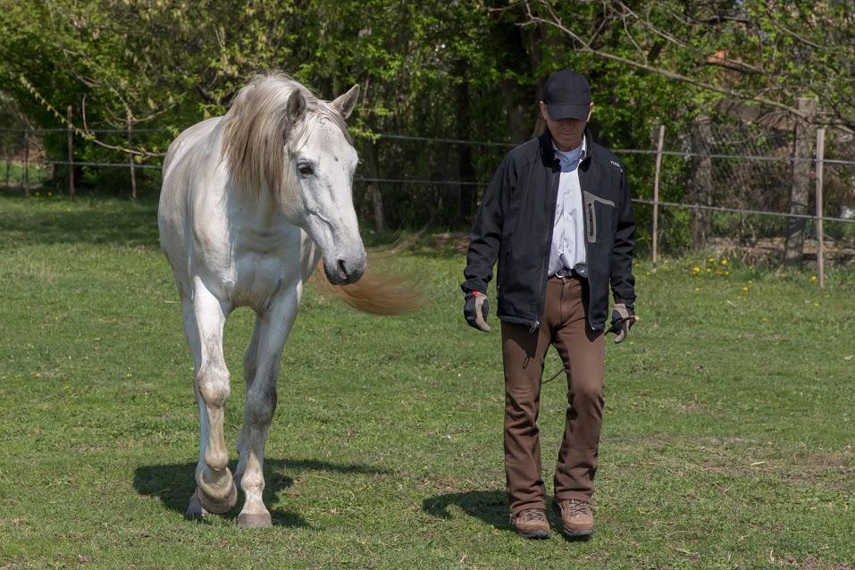 A kiegyensúlyozott ló